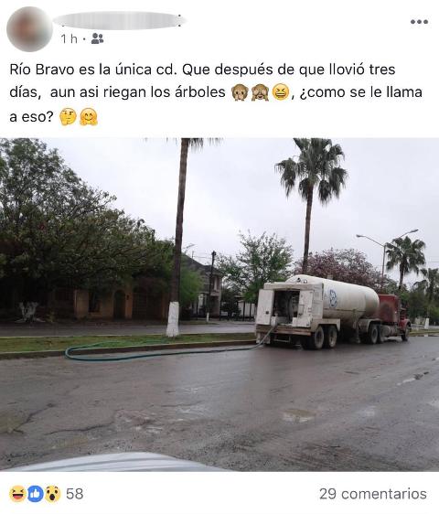 Municipio de Río Bravo, manda regar las plantas en época de lluvias