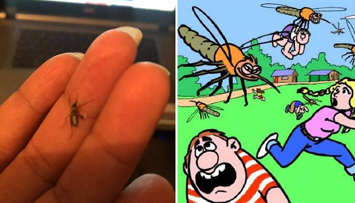 Abundante aparición de mosquitos en colonias de Río Bravo