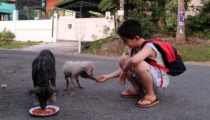 Niño de 9 años alimentaba perritos callejeros con comida que compraba de sus ahorros