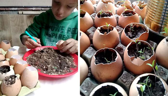 Niño enseña a sembrar utilizando cascara de huevo y semillas para generar conciencia agro-ecológica