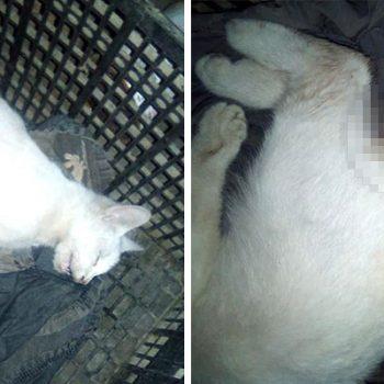 Violación sexual contra una gatita, alarma a los riobravanses