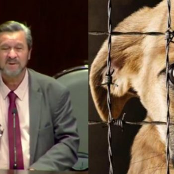Aprueban hasta dos años de prisión por maltrato a un animal