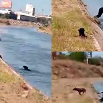 Policía se avienta al agua para salvar a un perrito en Culiacán