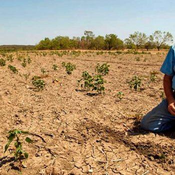 Tamaulipas en riesgo por severa sequía